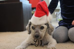 Tolerating the Santa hat