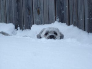 Moby burrows through the snow